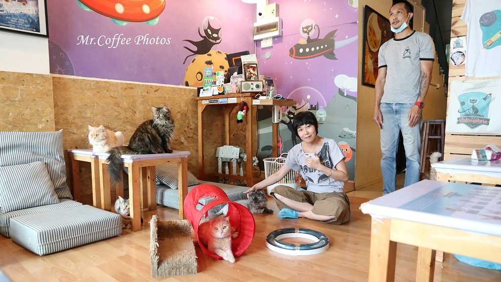 IMG_3349.JPG - D17清邁 3貓咖啡 Catmosphere Cat Café