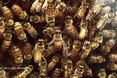 12.08.29【雲林。古坑】蜜蜂故事館:IMG_0361.JPG
