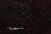 11.04.27【古坑】《山豬湖》賞螢火蟲:這邊草叢很多,可是很難拍,其實觀景窗裡一片漆黑,只能憑感覺對焦