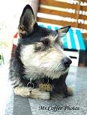 黑糖來了,體力驚人的三腳狗:IMG_20180214_135000.jpg