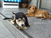 黑糖來了,體力驚人的三腳狗:IMG_20180214_135124.jpg