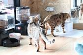 D17清邁 3貓咖啡 Catmosphere Cat Café:IMG_3285.JPG