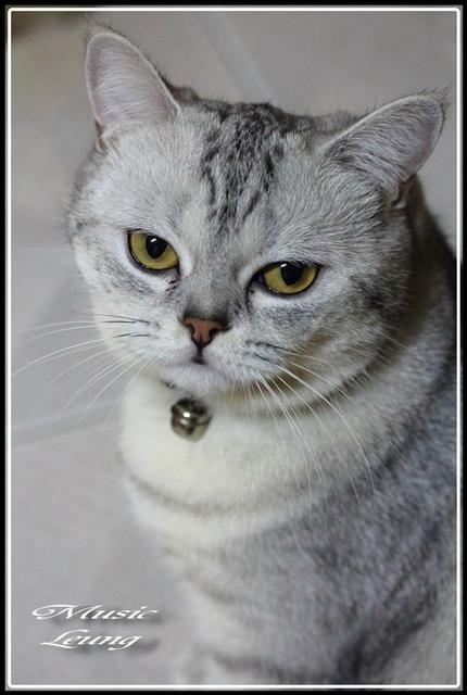 10557.jpg - 猫