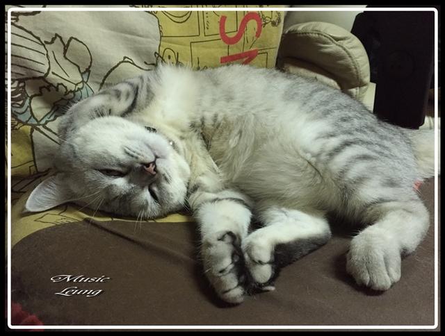 IMG_0620.jpg - 猫