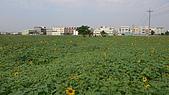 2008嘉義市花海節:L1100073.JPG