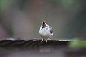 飛羽---台灣特有種:IMG_8743.JPG