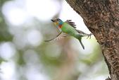 五色鳥:IMG_2359.JPG