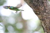 五色鳥:IMG_2430.JPG