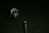 短耳鴞 Short-eared Owl:A23P8622.JPG