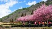 20150224武陵花祭:DSC05734.jpg