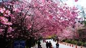 20150224武陵花祭:DSC05729.jpg