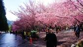 20150224武陵花祭:DSC05688.jpg