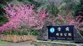 20150224武陵花祭:DSC05667.jpg