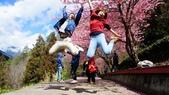 20150224武陵花祭:DSC05816.jpg
