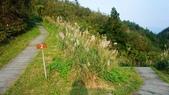 1051118五分山步道:DSC08647.jpg