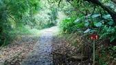 1051118五分山步道:DSC08630.jpg