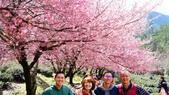 20150224武陵花祭:DSC05751.jpg
