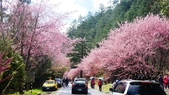20150224武陵花祭:DSC05716.jpg
