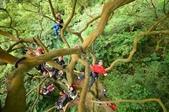 20141130爬樹:D7K_0232.jpg
