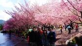 20150224武陵花祭:DSC05681.jpg