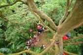 20141130爬樹:D7K_0229.jpg