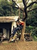 20141130爬樹:S__32432211.jpg
