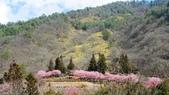 20150224武陵花祭:DSC05721.jpg