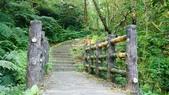 1051118五分山步道:DSC08632.jpg