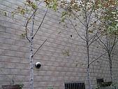 一順磁磚-3室外壁:木化石14x28cm (9).jpg