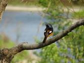 鳥:故宮南院21.jpg