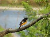 鳥:故宮南院19.jpg