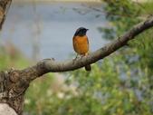 鳥:故宮南院20.jpg