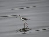 鳥:金城湖8.jpg