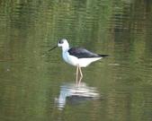鳥:大園海邊-03.jpg
