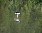 鳥:大園海邊-02.jpg