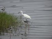 鳥:金城湖7.jpg