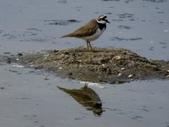 鳥:金城湖14.jpg