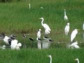 鳥:金城湖11.jpg