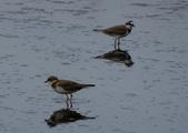 鳥:金城湖15.jpg