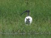 鳥:金城湖18.jpg