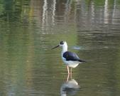 鳥:大園海邊-05.jpg
