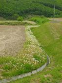 2016.6.4~6.12@北海道(Day5):蜿蜒種植的蒲公英