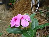 2006-12-15(台南五號樹屋採訪):DSC04838.JPG