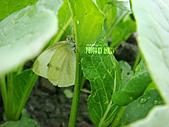 2011-02-18 春天的花兒:DSC08876.jpg