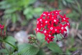 珊卓的生態觀察記錄(2018年):2018 ♥ 珊卓生態記記 0108-007