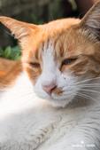 貓咪集:貓咪集 1090317-03