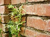 2011-02-18 春天的花兒:DSC08887.jpg