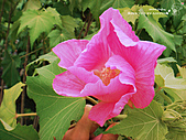 2010-09-07:DSC00425-1.jpg