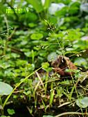 2011-02-18 春天的花兒:DSC08891.jpg