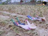 2011 鄉下好快活:DSC02540.jpg
